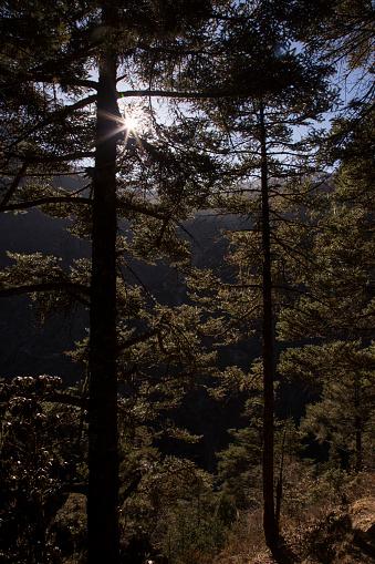 Khumbu「Pine forest near Namche Bazaar, Everest Base Camp Trek, Nepal」:スマホ壁紙(3)