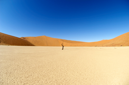 Wilderness Area「The end of Dead Vlei」:スマホ壁紙(6)