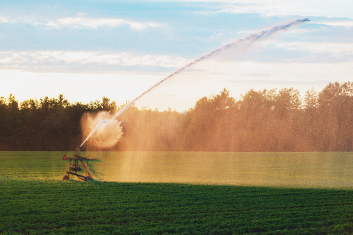 Insecticide「Agricultural Sprinkler in Carrot Field」:スマホ壁紙(15)