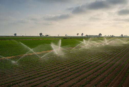 Sprinkler「Agricultural water sprinklers watering farm plants」:スマホ壁紙(14)