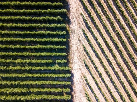 作物「agricultural fields」:スマホ壁紙(5)