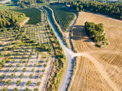 Grove「agricultural fields」:スマホ壁紙(19)