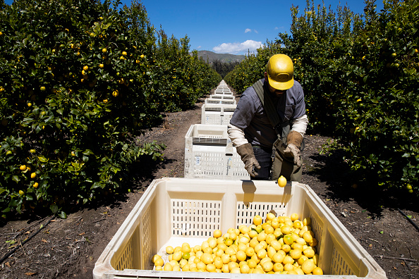 """Agriculture「""""Essential"""" Workers  Keep American Life Going During Coronavirus Pandemic」:写真・画像(13)[壁紙.com]"""