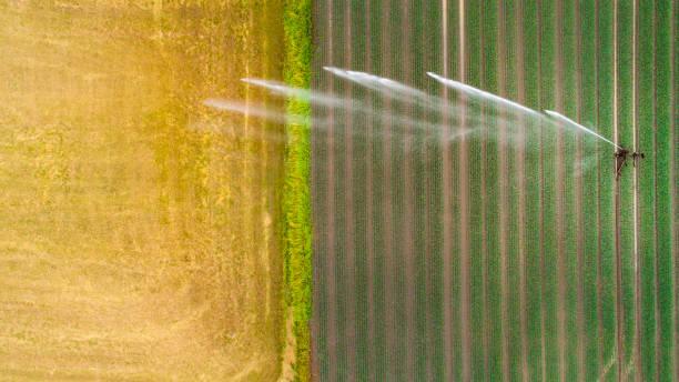Agricultural sprinkler, wheat field:スマホ壁紙(壁紙.com)