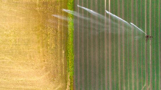 Sprinkler「Agricultural sprinkler, wheat field」:スマホ壁紙(7)