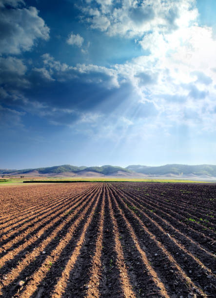 agricultural landscape of empty plowed field:スマホ壁紙(壁紙.com)