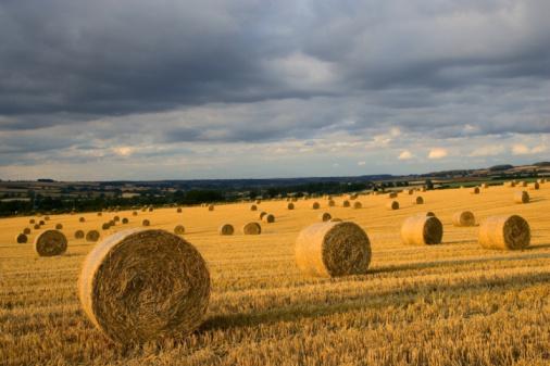 Hair Stubble「Straw bales, Cotswolds, Oxfordshire, UK」:スマホ壁紙(0)