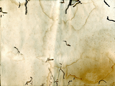 Manuscript「Old paper affected by paper louse」:スマホ壁紙(10)