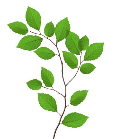 Branch「ビーチの葉」:スマホ壁紙(6)