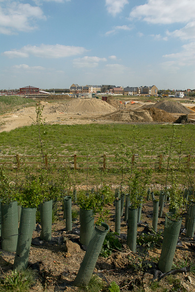 Planting「Housing development, Cambridge, UK」:写真・画像(12)[壁紙.com]