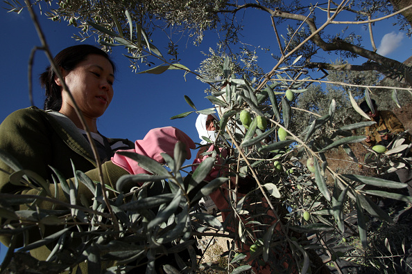 Persian Gulf Countries「Oil Prices Soar After Dismal Olive Harvest」:写真・画像(5)[壁紙.com]