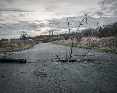 Bare Tree「derelict urban land, formally a housing estate, now a wilderness」:スマホ壁紙(19)