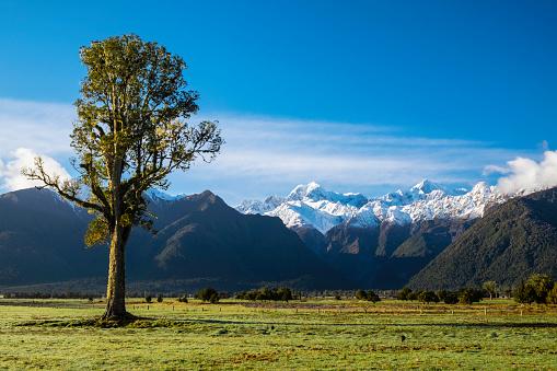 Fox Glacier「Kahikatea Tree And The Southern Alps」:スマホ壁紙(18)