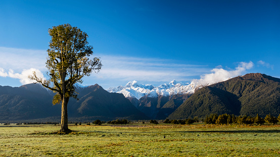 Westland National Park「Kahikatea Tree And The Southern Alps」:スマホ壁紙(8)