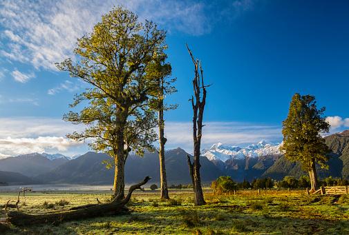 Fox Glacier「Kahikatea Trees And The Southern Alps」:スマホ壁紙(17)