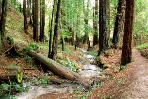Big Sur「Stream, Julia Pfeiffer Burns State Park, California」:スマホ壁紙(1)