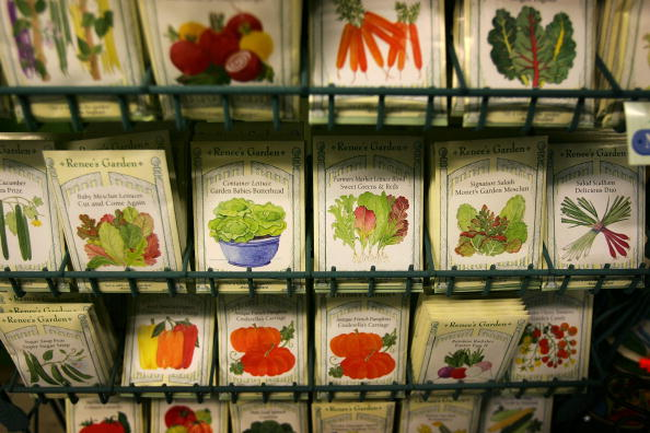 Seed「Soaring Food Prices Prompt Renewed Interest In Gardening」:写真・画像(1)[壁紙.com]