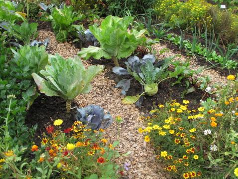 Marigold「Vegetable Garden」:スマホ壁紙(3)