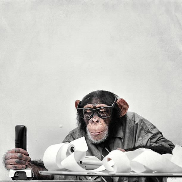 Accountant Goofy Chimp:スマホ壁紙(壁紙.com)
