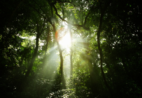 ������「The light coming through the forest.」:スマホ壁紙(12)