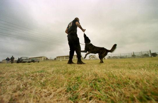 Overcast「Military Working Dogs FAA」:写真・画像(4)[壁紙.com]
