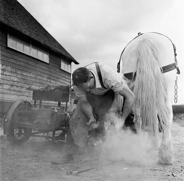 Farm「Shoeing A Horse」:写真・画像(17)[壁紙.com]