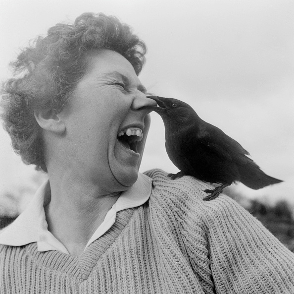 Animal「Nose Peck」:写真・画像(6)[壁紙.com]