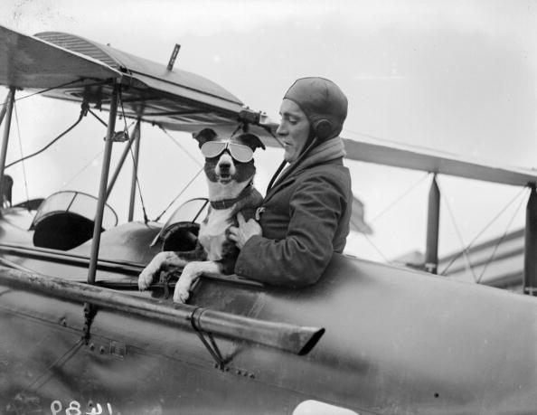 飛行機「Dogged Flyer」:写真・画像(15)[壁紙.com]