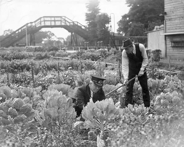 Gardening「Tending Cabbages」:写真・画像(16)[壁紙.com]
