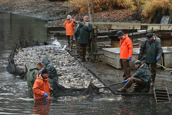 Fisherman「Fisheries Harvest Christmas Carp」:写真・画像(5)[壁紙.com]