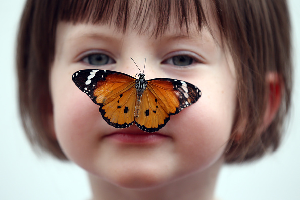 動物「Sensational Butterflies Exhibition Launches With Hundreds Released」:写真・画像(11)[壁紙.com]