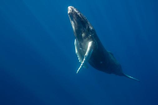 Whale「Migratory pelagic marine life.」:スマホ壁紙(15)