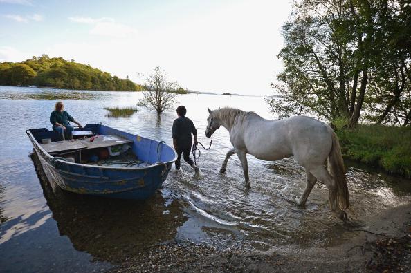 Vertebrate「Horses Are Exercised In The Waters Of Loch Lomond」:写真・画像(8)[壁紙.com]
