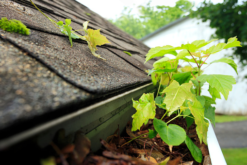 Pennsylvania「clogged roof gutter in need of maintenance after rain」:スマホ壁紙(8)