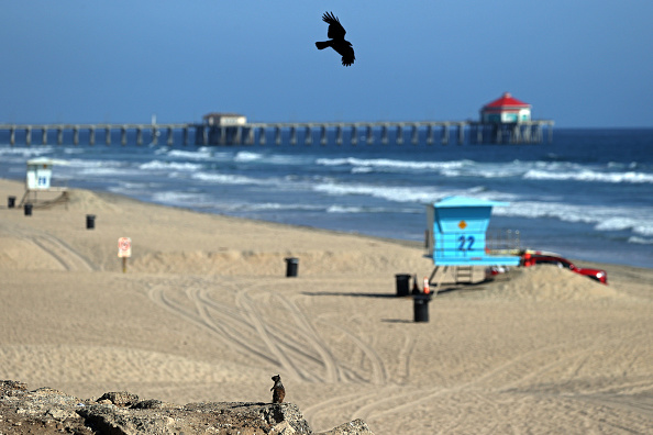 Squirrel「California Governor Newsom Orders All Beaches In State To Close」:写真・画像(18)[壁紙.com]