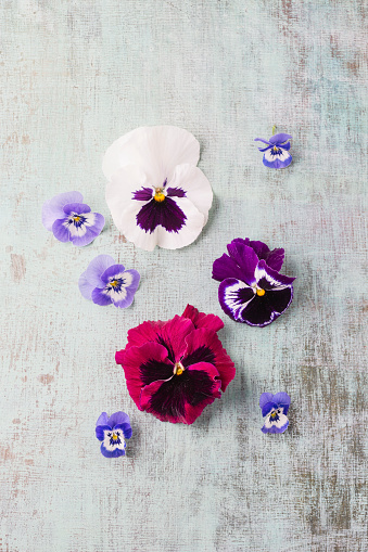 Pansy「Edible pansies and violets」:スマホ壁紙(19)