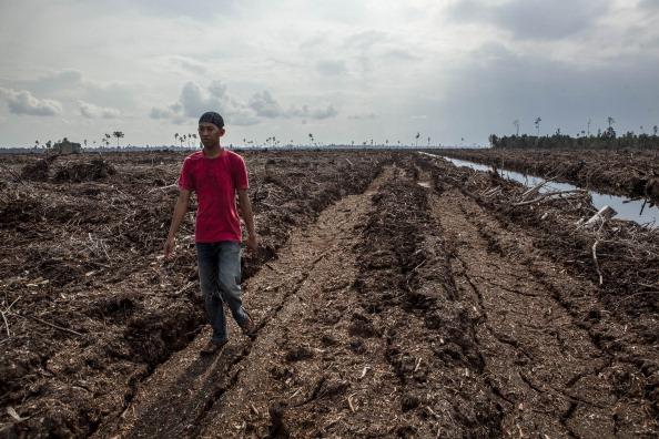 Deforestation「Indonesia's Deforestation Rate Becomes Highest In The World」:写真・画像(15)[壁紙.com]