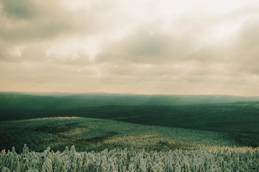 Nostalgia「Forests in remote landscape」:スマホ壁紙(7)