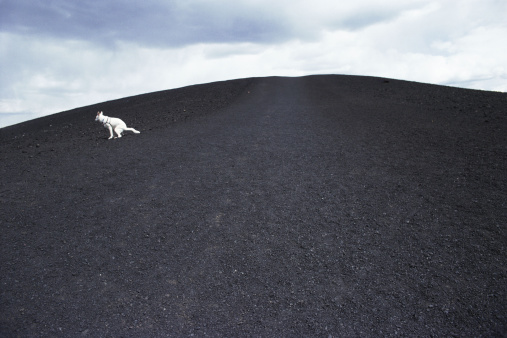 Lava「Dog at craters of moon」:スマホ壁紙(6)