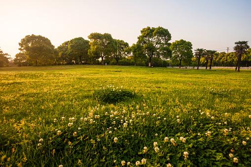Environmental Conservation「Wuxi City, Jiangsu Province」:スマホ壁紙(16)