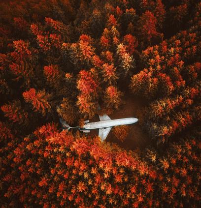 秋「森の中で失われた飛行機」:スマホ壁紙(5)