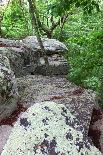 Needle - Plant Part「Cheaha State Park - Alabama」:スマホ壁紙(1)