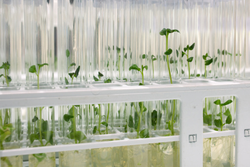 Glass - Material「industrial food: in-vitro cultivation, close-up of potato sprouts」:スマホ壁紙(8)