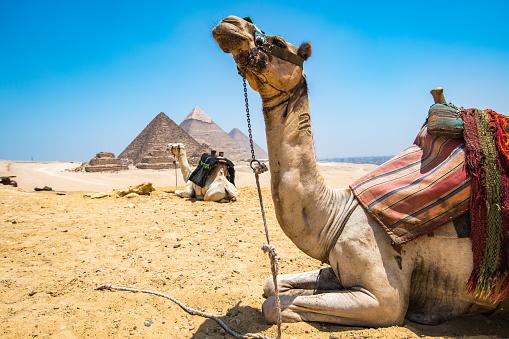 Ancient Civilization「Camel caravan」:スマホ壁紙(11)