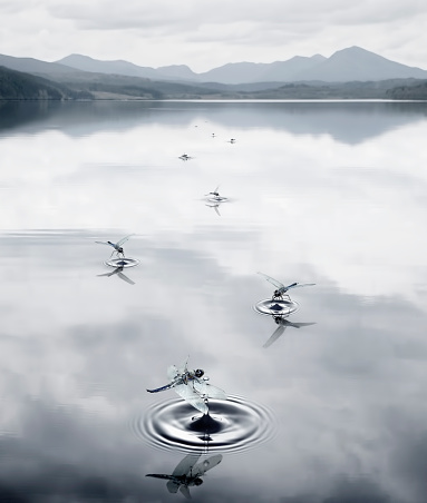 Dragonfly「Insects making ripples in still rural lake」:スマホ壁紙(14)