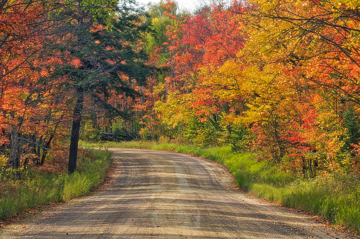 サトウカエデ「Autumn Sugar Maple Trees. Algonquin Provincial Park, Ontario. Canada.」:スマホ壁紙(6)