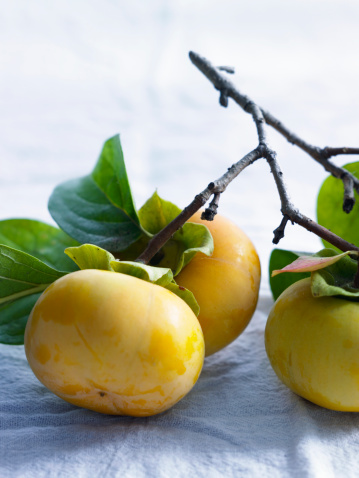 persimmon「Persimmons on vine with leaves」:スマホ壁紙(18)