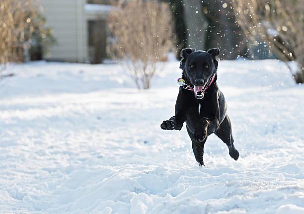 Excited Dog Leaping Through Snow:スマホ壁紙(壁紙.com)