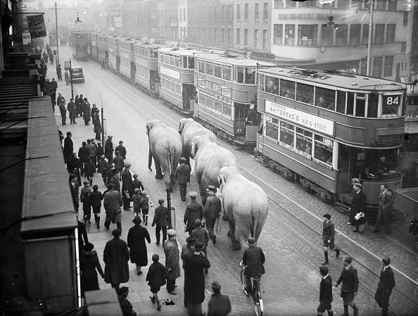 動物「Elephant Parade」:写真・画像(18)[壁紙.com]