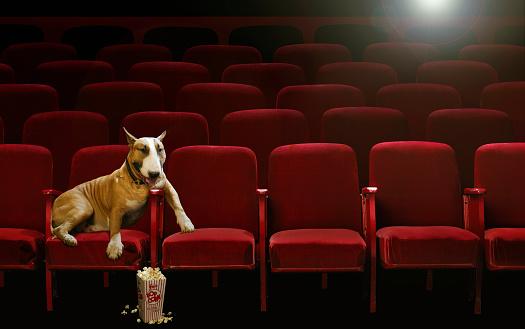 Watching「Bull Terrier Watching Movie in Theater」:スマホ壁紙(19)